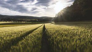 Son Dönemin Dikkat Çeken Tarım Teknolojileri