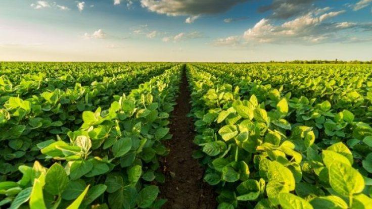 Ekolojik Tarım Nedir? Organik Tarım Nedir?