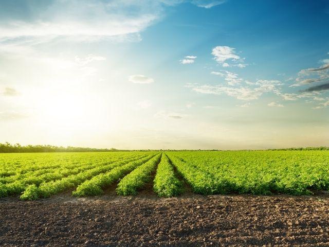 ekolojik-koyy-ekolojik-tarim-nedir-organik-tarim-nedir